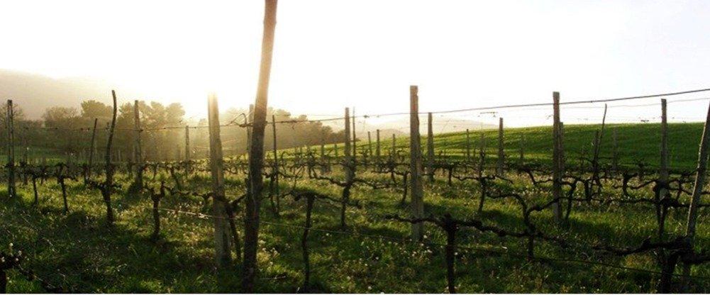 Planete vins international - les invincibles